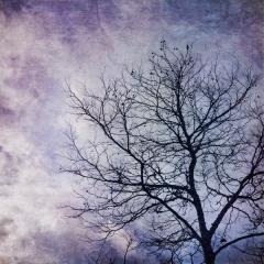 Blueberry Sky