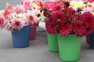 Colorful flowers and pots in the Corvallis, Oregon farmer's market