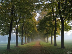 Parco di Monza, linear perspective, path, tree, morning