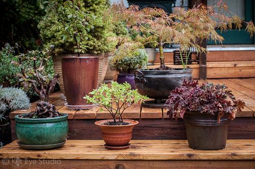 Garden of Gentle Breeze