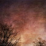Treescapes Benediction Kat Sloma Mobile Photography
