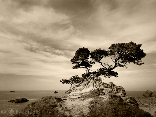 Kat Sloma Tree Photograph Crescent City California