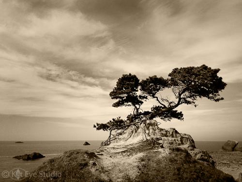 Kat Sloma Tree Photograph Crescent City California