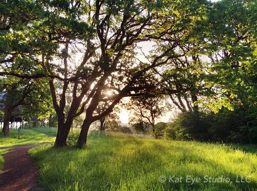 Bald Hill Park Corvallis Oregon Kat Sloma Photography