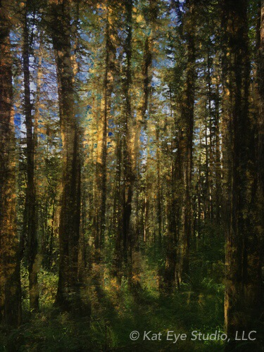 Forest Oregon Kat Sloma Mobile Photography