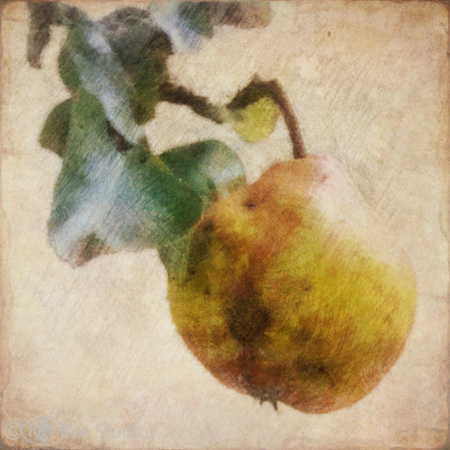 Oregon Pear Autumn Harvest Kat Sloma Mobile Photography