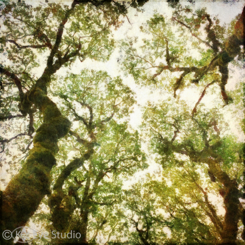 Summer Oak Oregon Kat Sloma Mobile iPhone Photography