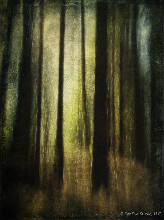 Oregon Forest Morning Light Kat Sloma iPhone Altered Photography