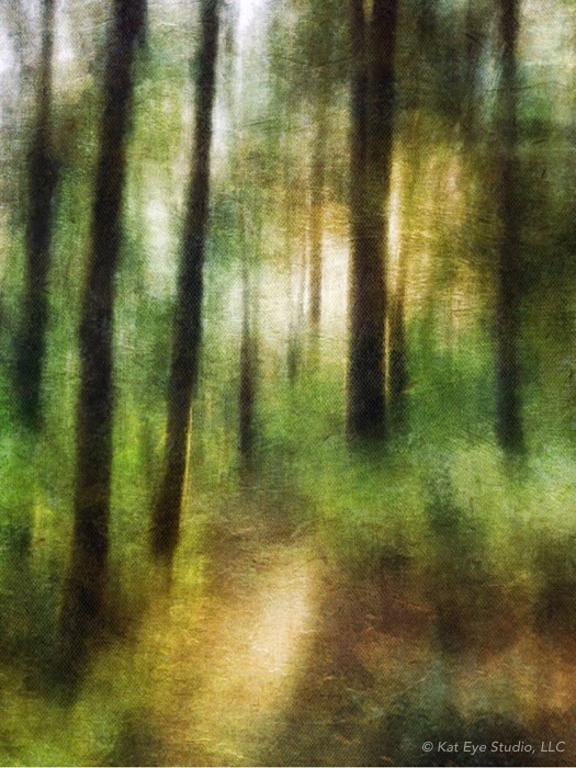 Corvallis Oregon Forest Abstract Kat Sloma iPhone Photography