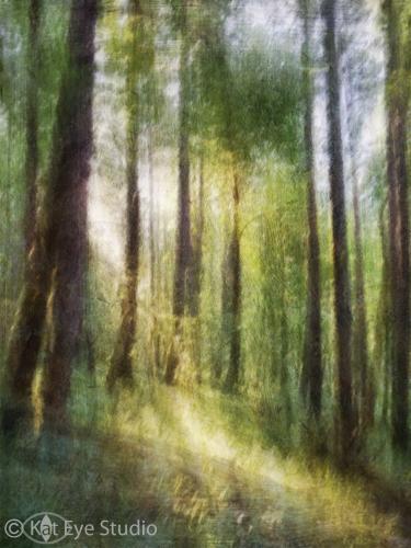 Oregon Forest Trees Kat Sloma iPhone Photography