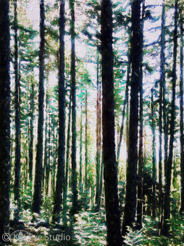 Oregon Forest Trees Kat Sloma iPhone Photography