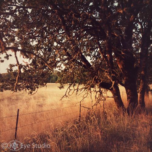Kat-Sloma-Photography-5897