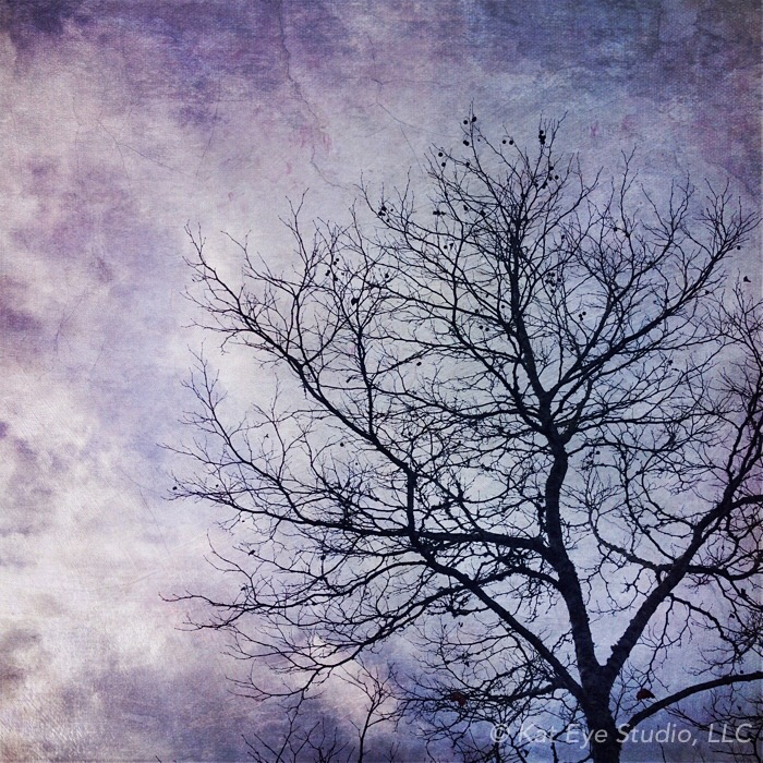 Winter Tree Sky Blue Purple Kat Sloma iPhone Photography  #30edits