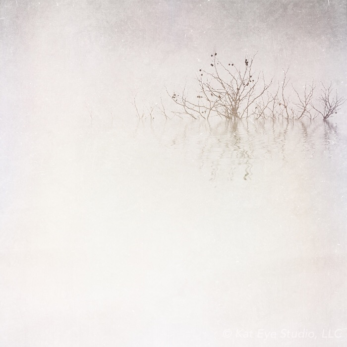 Winter Fog Lake Tree Kat Sloma iPhone Photography  #30edits